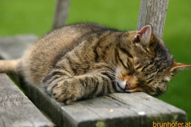 07.18 Freitag Katze Hallstatt JausenstationNacht (21)