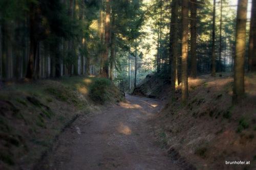 Wald in Gaugsham / Altheim